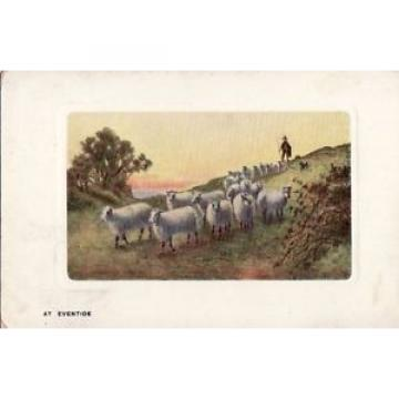 M17.Vintage Postcard.At Eventide.Sheep going home.