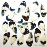 20 REAL BUTTERFLY  wing jewelry artwork material ooak DIY gift #14